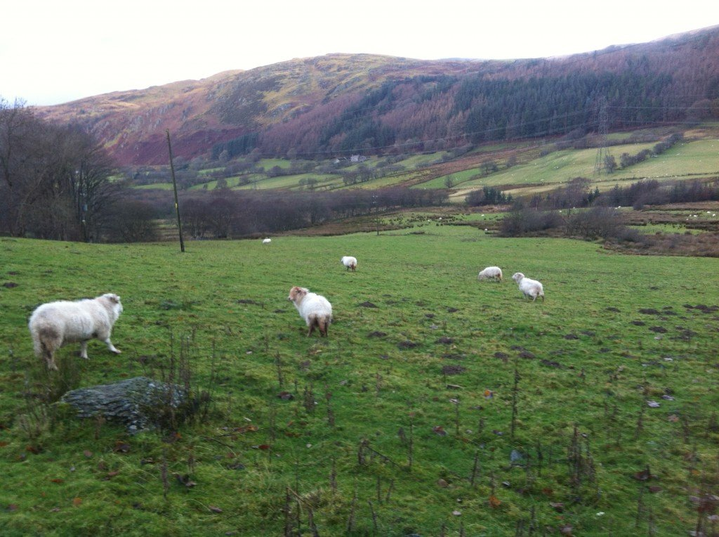 The view from Old Farm, looking out on the happiest sheep in the UK