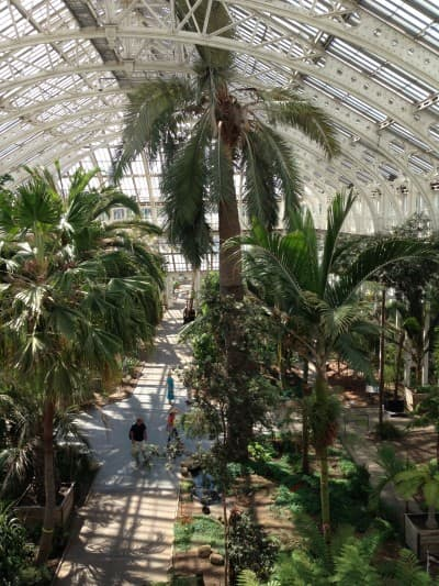 The view from the top balcony of the Temperate House - closed for a 5 year refurbishment from 5 August
