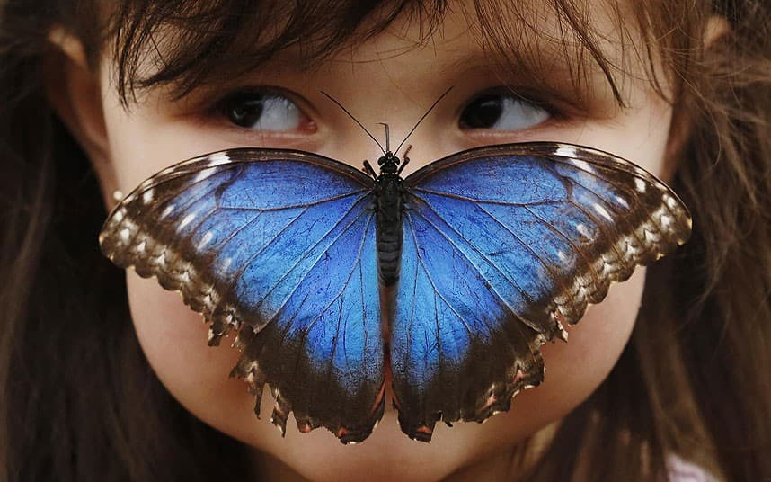 butterfly on girl