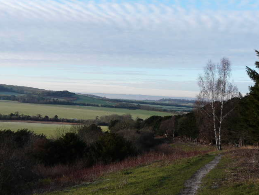 Wallington Hill Walk